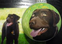 Beautiful portrait painted of Black Lab with green background brings out his green eyes.